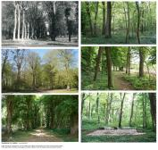 or-photo foret